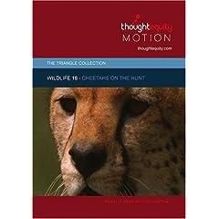 Wildlife 18 - Cheetahs on the Hunt (Royalty Free Motion Video)