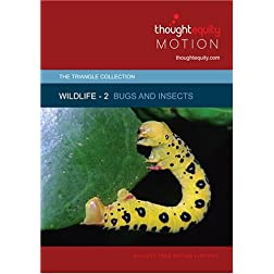 Wildlife 2 - Bugs and Insects