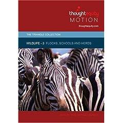 Wildlife 3 - Flocks, Schools and Herds (Royalty Free Motion Video)