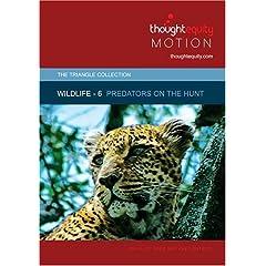 Wildlife 6 - Predators on the Hunt (Royalty Free Motion Video)