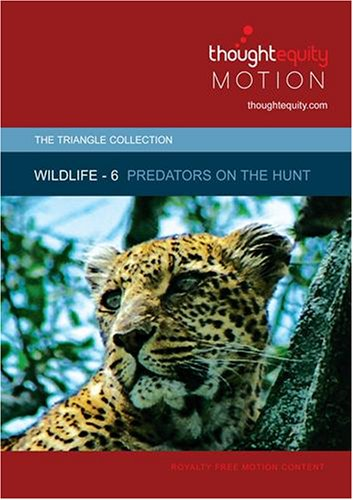 Wildlife 6 - Predators on the Hunt