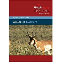 Wildlife 17 - Range Life (Royalty Free Motion Video)