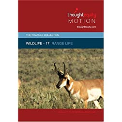 Wildlife 17 - Range Life