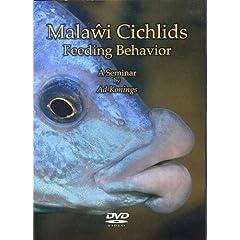 Malawi Cichlids Feeding Behavior, A Seminar by Ad Konings