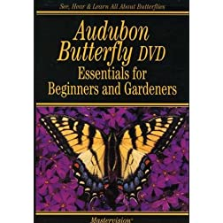 Audubon Butterfly: Essentials For Beginners & Gardeners