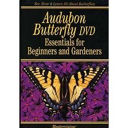 Audubon Butterfly: Essentials For Beginners & Gardeners