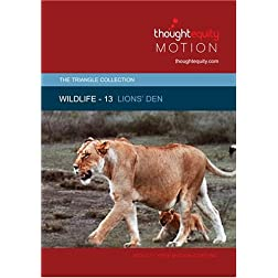 Wildlife 13 - Lions' Den