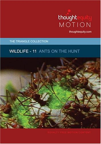 Wildlife 11 - Ants on the Hunt