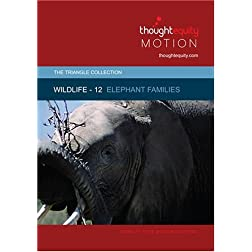 Wildlife 12 - Elephant Families