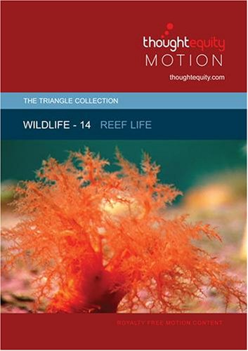 Wildlife 14 - Reef Life