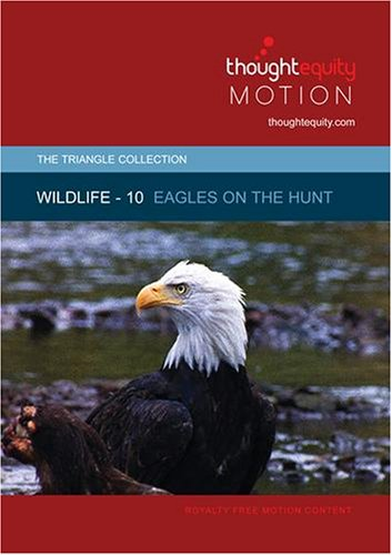 Wildlife 10 - Eagles on the Hunt