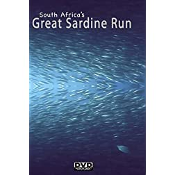 South Africa's Great Sardine Run