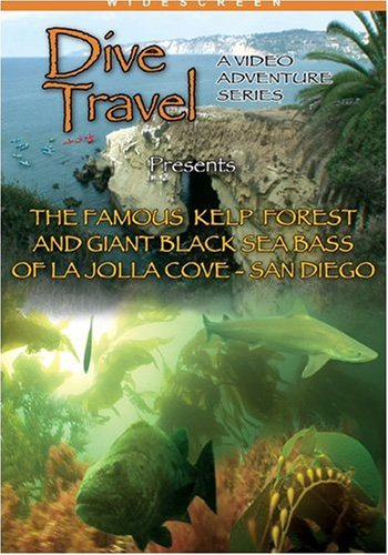 Dive Travel The Famous Kelp Forest and Giant Sea Bass La Jolla, San Diego, CA