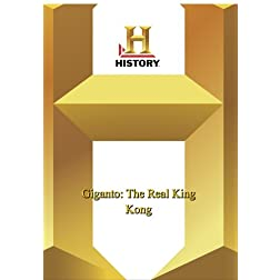 History -- Giganto: The Real King Kong