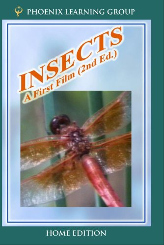 Insects: A First Film (Home Use)