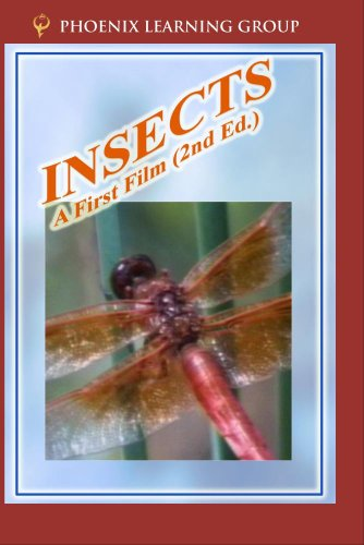 Insects: A First Film