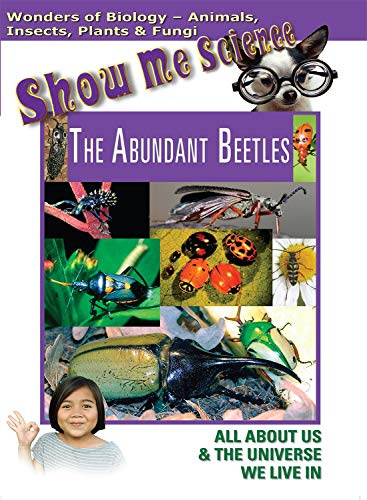 The Abundant Beetles