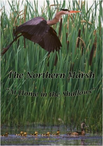 """The Northern Marsh, At Home in the Shallows"""