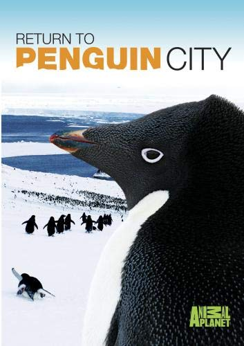 Return To Penguin City