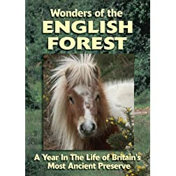 English Ponies of The Forest