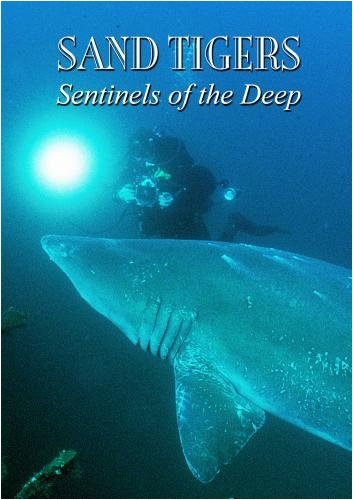 Sand Tigers - Sentinels of the Deep