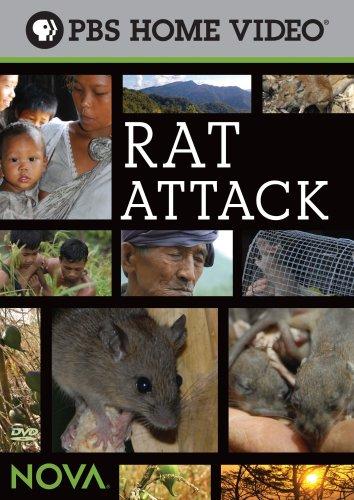 Rat Attack!