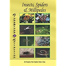 The Globescope Collection  Insects, Spiders & Millipedes Royalty Free Stock Footage