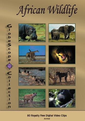 The Globescope Collection  African Wildlife Royalty Free Stock Footage