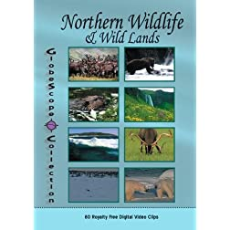 The Globescope Collection  Northern Wildlife & Wild Lands - Royalty Free Stock Footage
