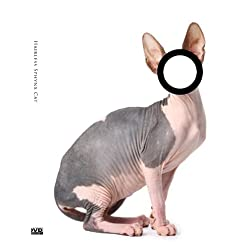 Hairless Sphynx Cat  [Probably the Most Popular DVD Art Movie 2009]