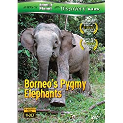 Borneo's Pygmy Elephants (As seen on Discover HD)