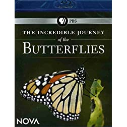 NOVA: The Incredible Journey of the Butterflies [Blu-ray]