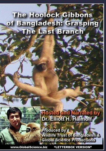 The Hoolock Gibbons Of Bangladesh: Grasping The Last Branch