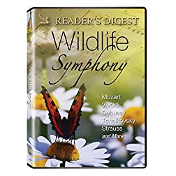 Wildlife Symphony