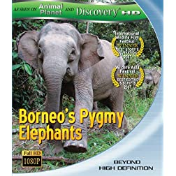 Borneo's Pygmy Elephants [Blu-ray]