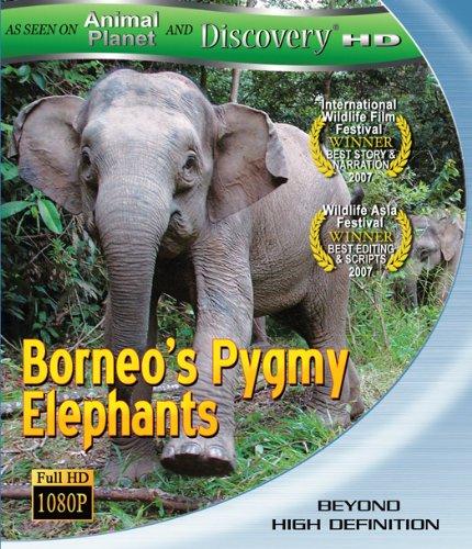 Borneo's Pygmy Elephants [Blu-ray]