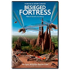 The Besieged Fortress