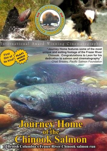 Journey Home of the Chinook Salmon