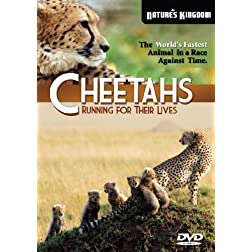 Cheetahs  Running for their Lives