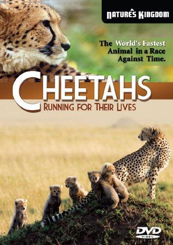 Cheetahs  Running for their Lives