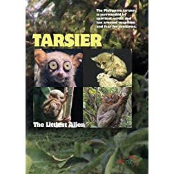 Tarsier: The Littlest Alien (Non-Profit Use)