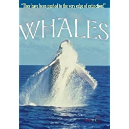 Whales (Institutional Use)