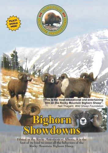 Bighorn Showdowns Vol. 3