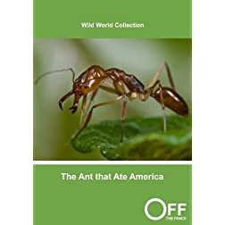The Ant that Ate America