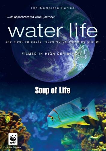Water Life: Soup of Life