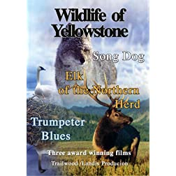 Wildlife of Yellowstone
