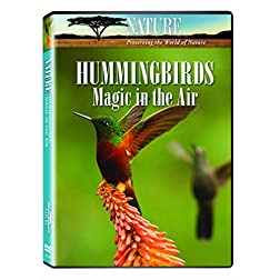Nature: Hummingbirds