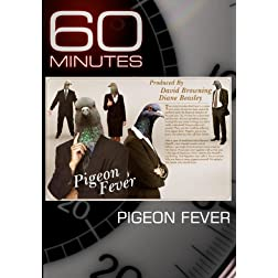 60 Minutes - Pigeon Fever (February 14, 2010)