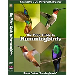 The Video Guide to Hummingbirds