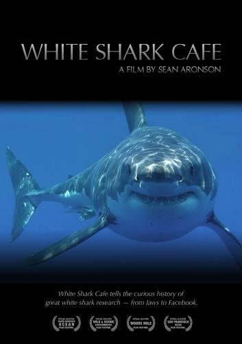 White Shark Cafe